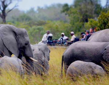 safari-sudafrica